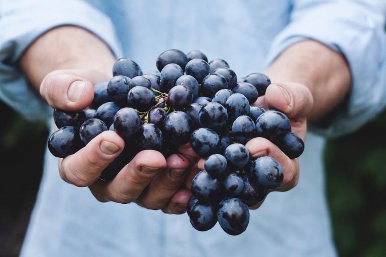 Wine grapes | © Maja Petric