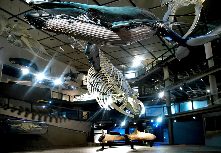 The Whale Well at the SA Museum
