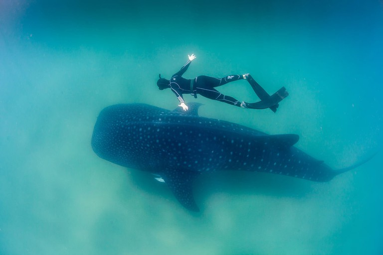 Sodwana Bay has many fantastic diving spots, and if you're lucky you'll spot a gentle whale shark