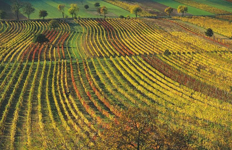 Vineyards near Oggau | © Österreich Werbung/H.Wiesenhofer