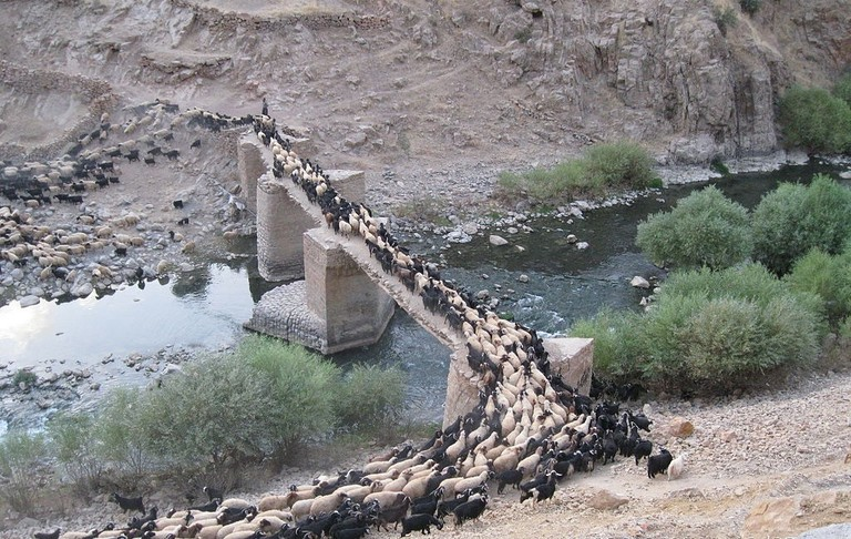 Sheep cross over the stone bridge of Palangan