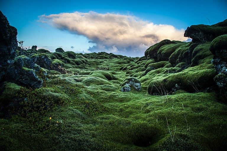 Moss: an important part of the Icelandic ecosystem