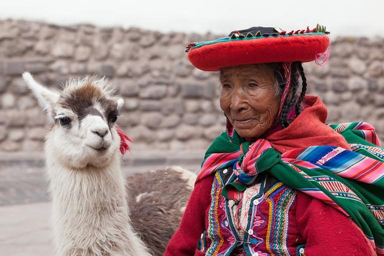 A llama in Cusco