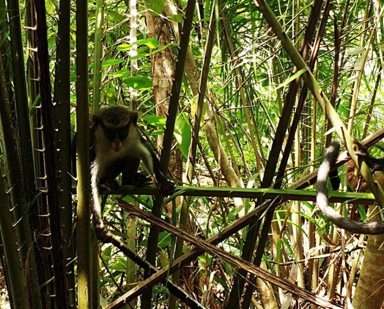 Wildlife at the conservation, Lekki