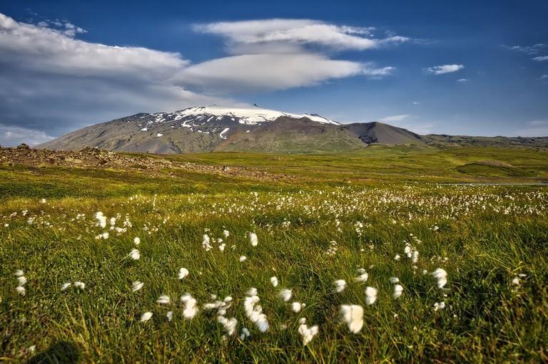 Snæfellsjökull og fífur | © Ævar Guðmundsson/Flickr