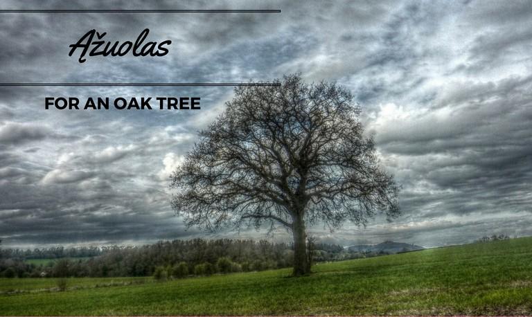 An oak tree