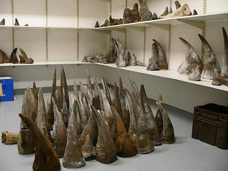 Government-held rhino horn stockpile