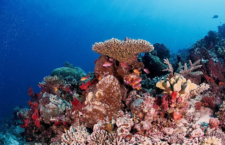 Taveuni Diving