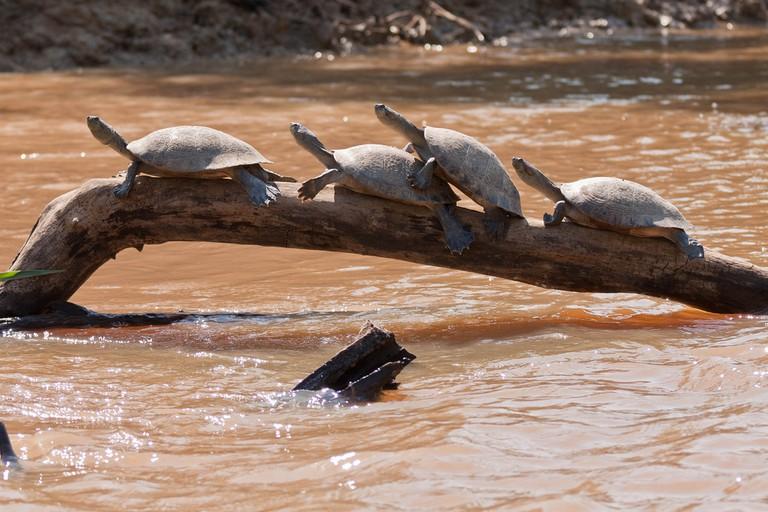 Turtles on the pampas trip