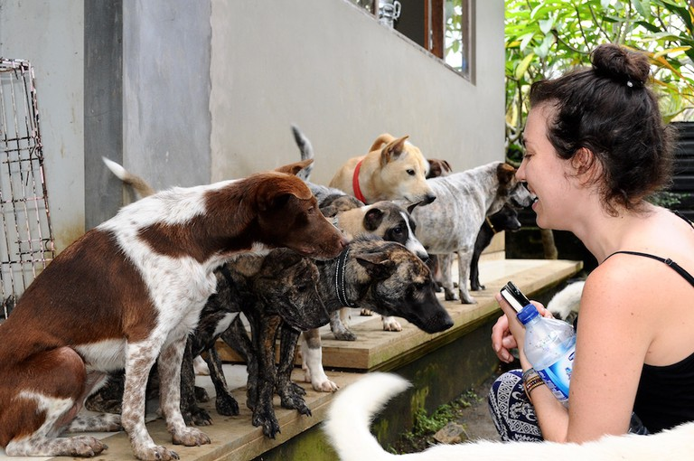 Rescued dogs at the BAWA Adoption house in Ubud | © Nikki Vargas