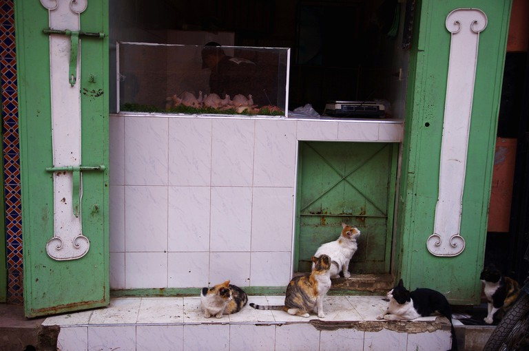 Cats waiting eagerly in front of a meat seller's stall