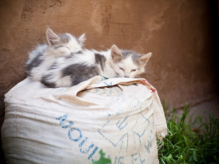 Kittens resting on a sack