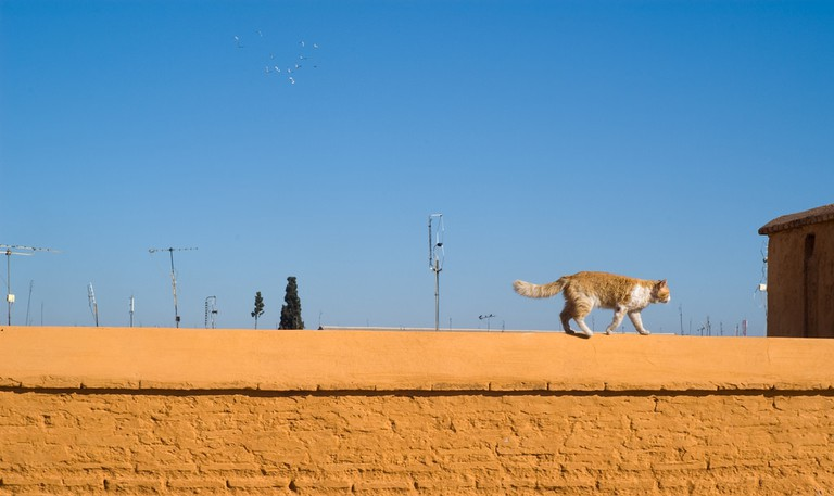 Cat walking along the top of a wall in the medina
