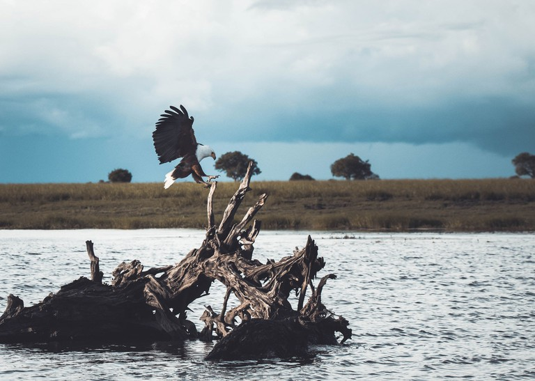 Chobe_Botswana