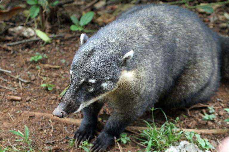 Have a coati encounter I