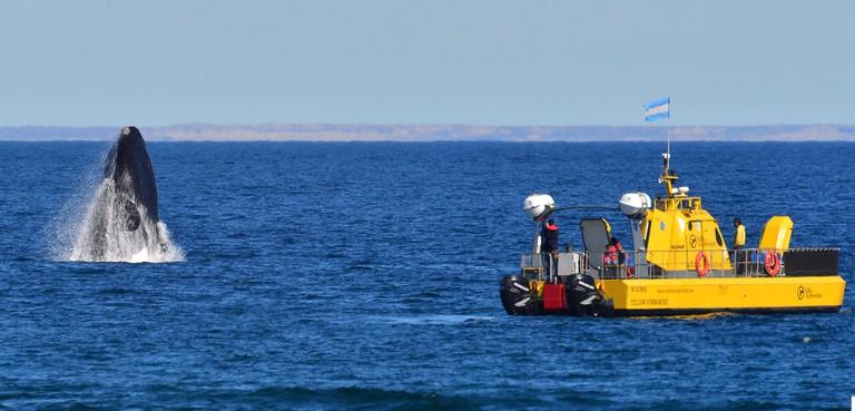 The yellow submarine whale-watching adventure
