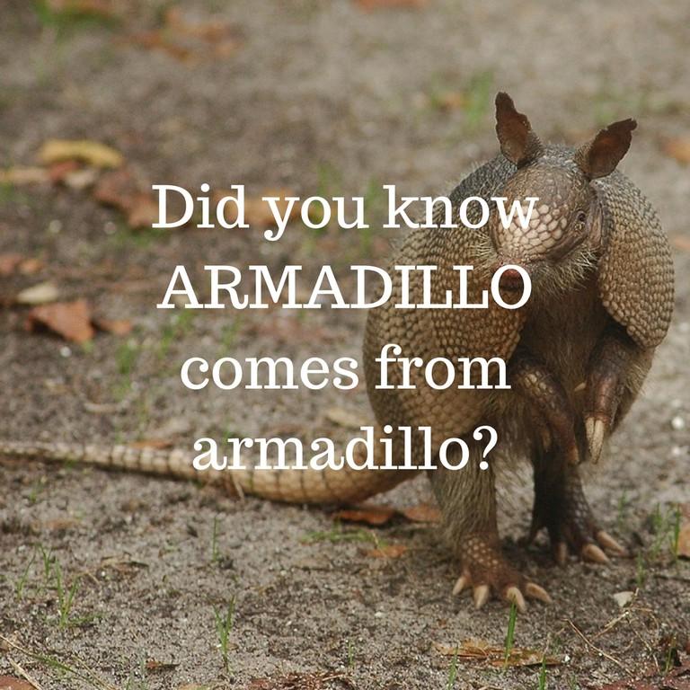Armadillo / © Culture Trip
