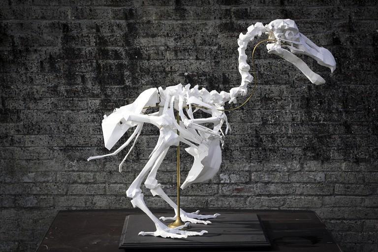Dodo skeleton by Axel Goossens | courtesy of the artist