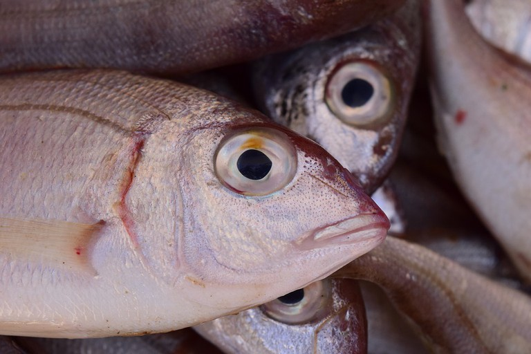Fish fresh from the sea