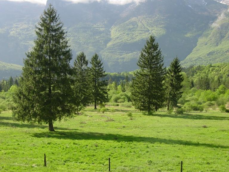Green Slovenia│