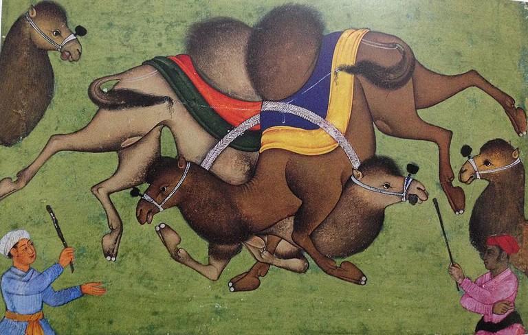 Mughal Camel Fighting