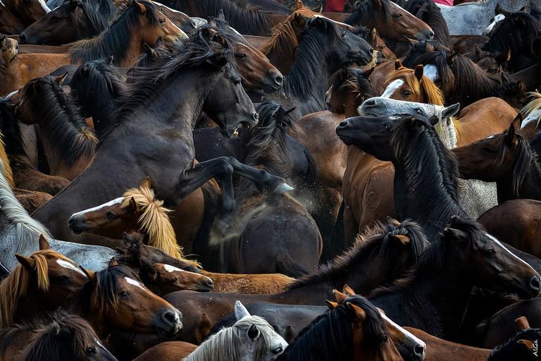 A Rapa das Bestas, Galicia