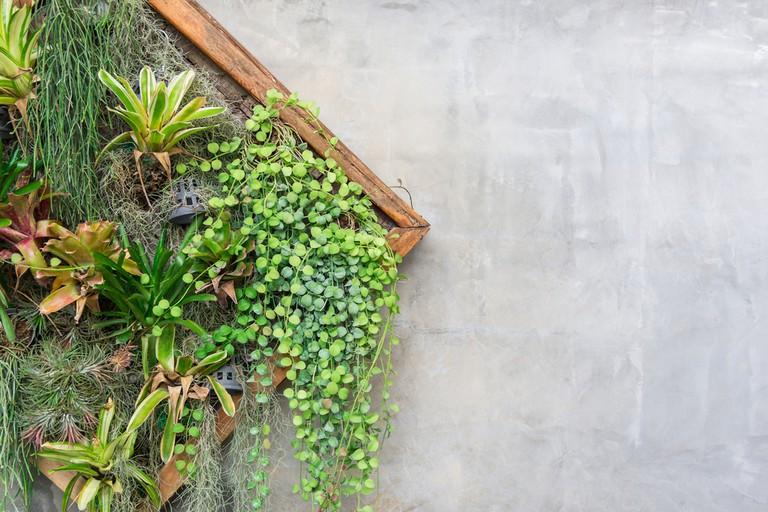 DIY plant wall