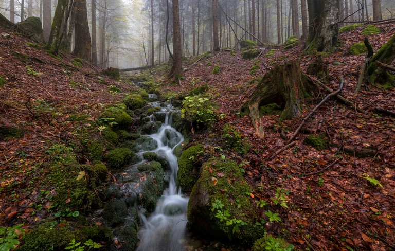 Martuljek Forest│