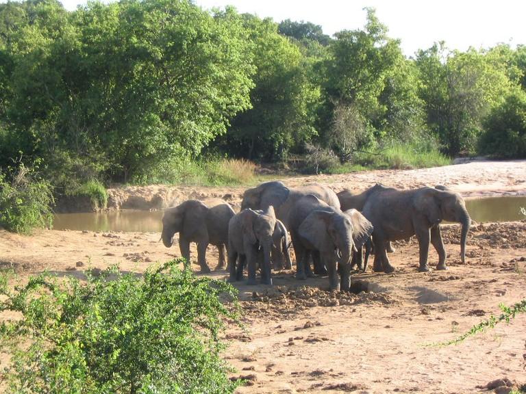 Elephants grazing at the Yankari Game Reserve in Bauchi State