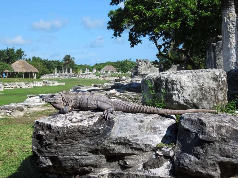 El Rey archeological zone