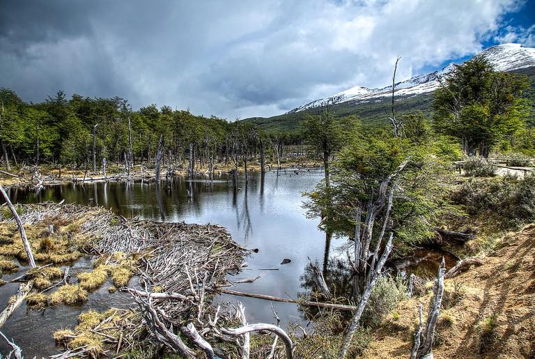 Beaver Dam in the Tierra del Fuego National Park