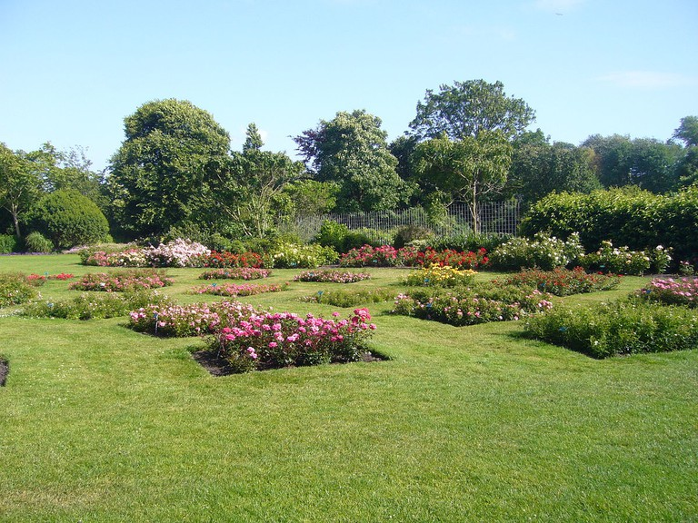 Rose beds in the park