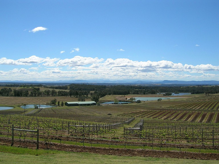 Hunter Valley View with vineyards