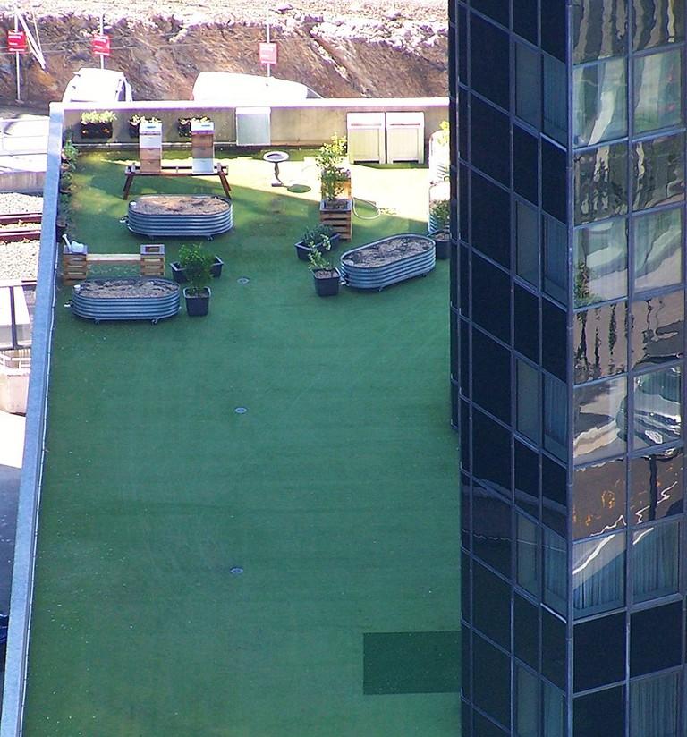 Rooftop Beehives Brisbane