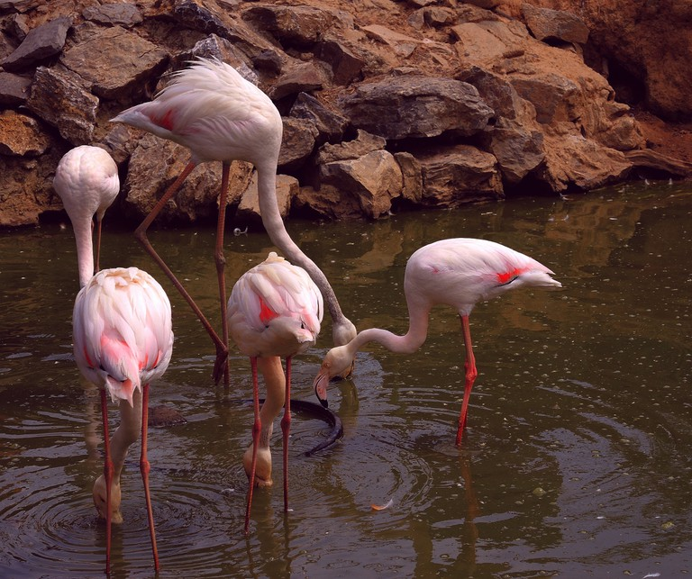 Polonezköy Zoo