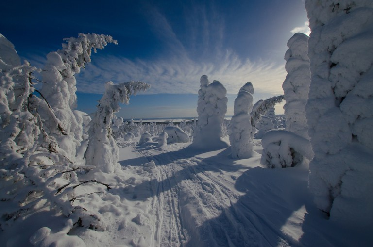 Snow covered trees in Riisitunturi / Tero Laakso / Flickr