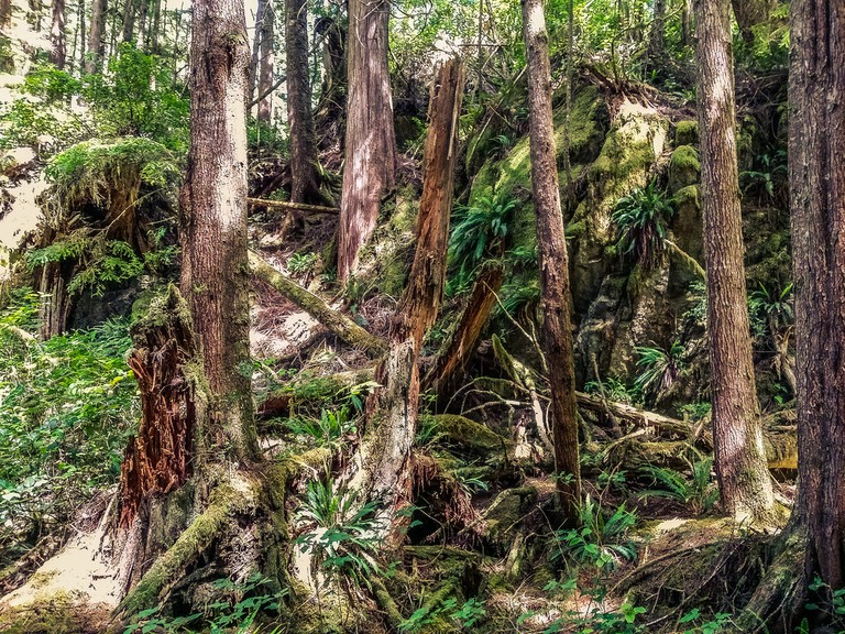 Where the Sasquatch roams in British Columbia