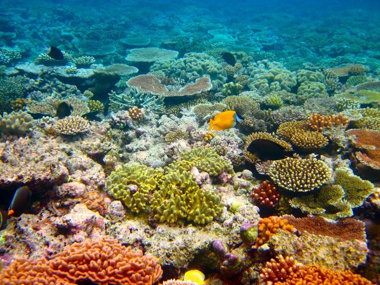 Reef tour l
