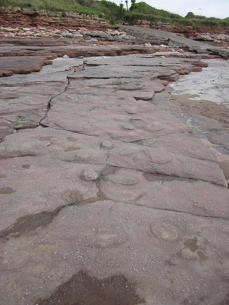 Bendricks Dinosaur Footprints.