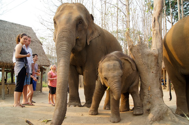 Patara Elephant Sanctuary, Chiang Mai