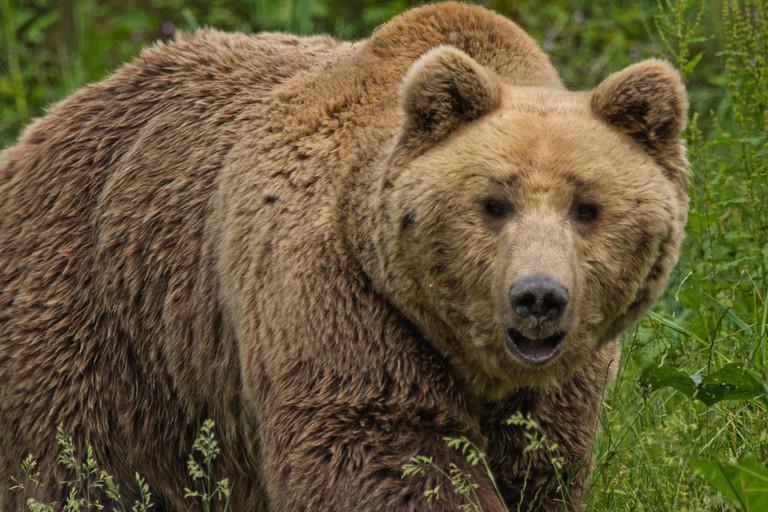 Hairy Bear│