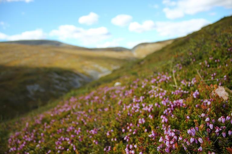Spring landscape in Pallas-Yllästunturi / Crowbared / Flickr