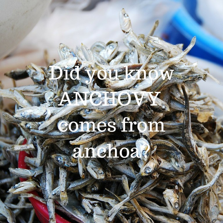 Anchovy /