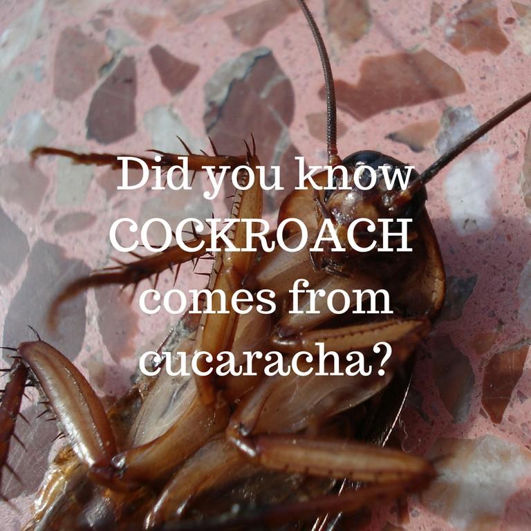 Cockroach / © Culture Trip