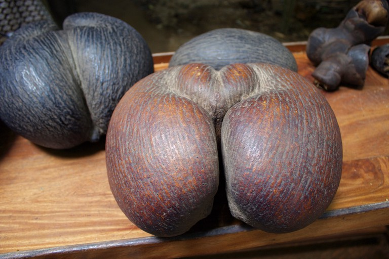 The worlds largest (and cheekiest) nut the Coco de Mer