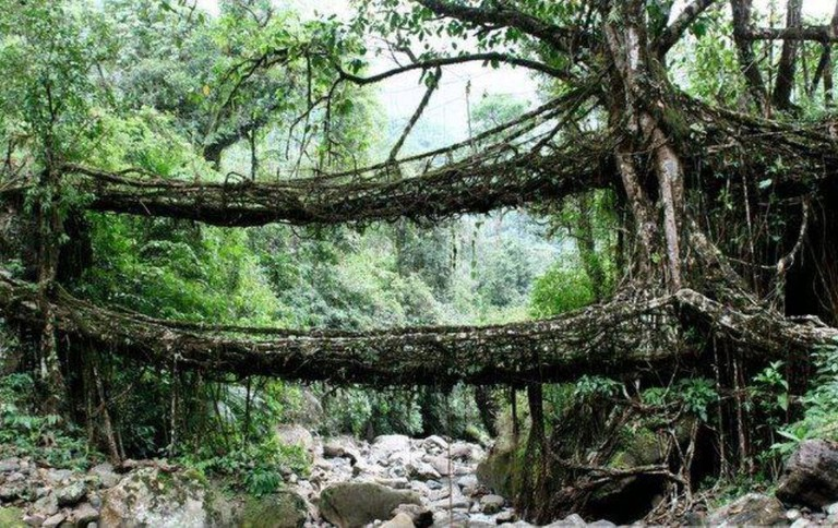 Double Decker Living Root Bridges in Cherrapunji | © 2il org / Flickr
