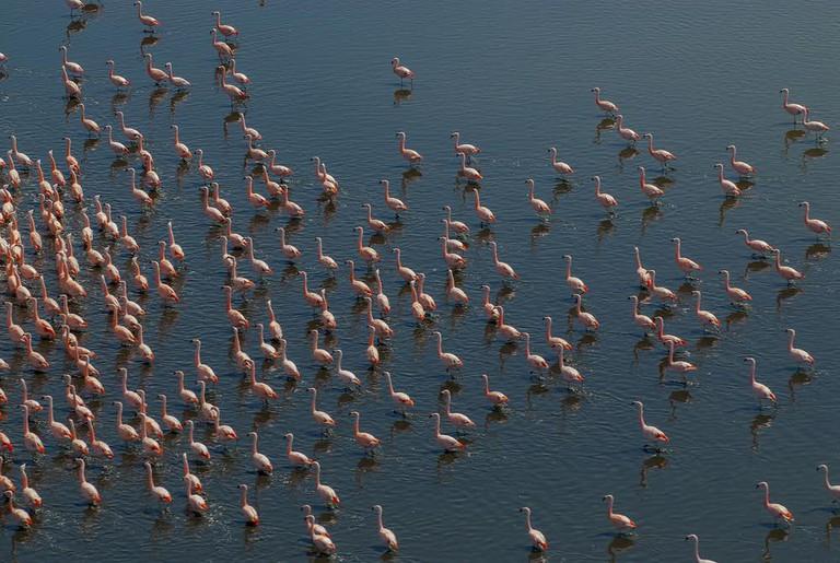 Flamingos in La Pampa