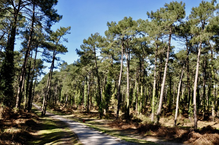 Forêt Pignada – Anglet