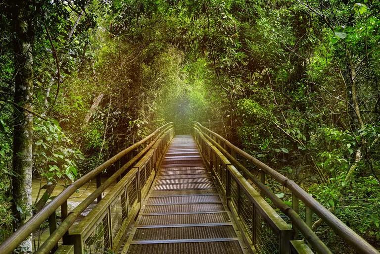 Rainforest area around Iguazu