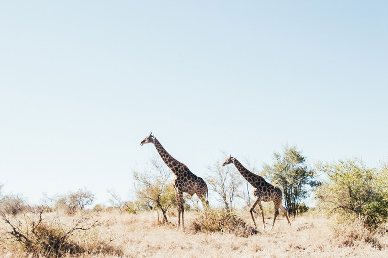 The best time to visit the Kruger National Park is during the South African winter, from June to September